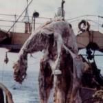 """Морские чудовища, тайна океанов, находка """"Зуйо-мару"""""""