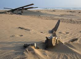 Берег скелетов, робинзоны коварного берега