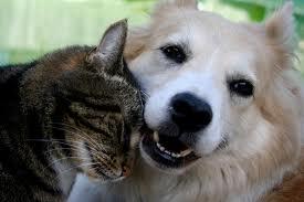 Дружба между собакой и кошкой