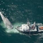 Столкновения с китами