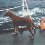 Животные на судне