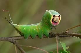 Забавные насекомые