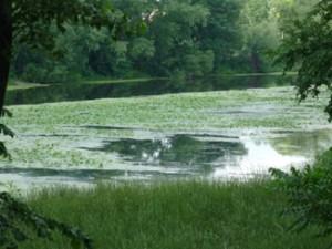 Самчики, усадьба, парк, река Случ