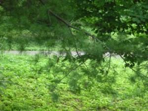Самчики, усадьба, парк