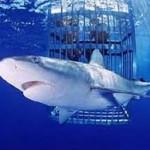 Акульи аттракционы