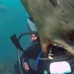нападения морских обитателей на подводные аппараты